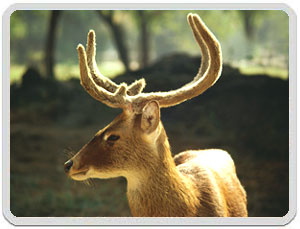 Sariska Wildlife Tour